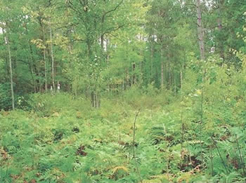 Land For Sale in Hayward WI